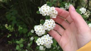 [ASMR] Plants, Rain and some Tapping at 6 am in my Garden