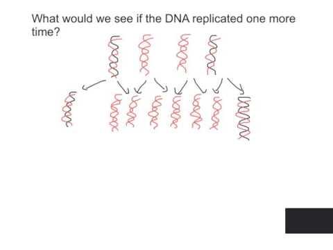semi conservative replication of DNA