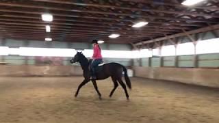 Arabella under saddle