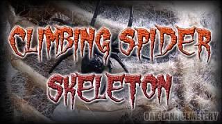 Climbing Spider Skeleton Tutorial