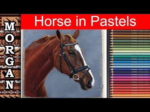how-to-draw-a-horse-using-pastel-pencils---jason-morgan-wildlife-art