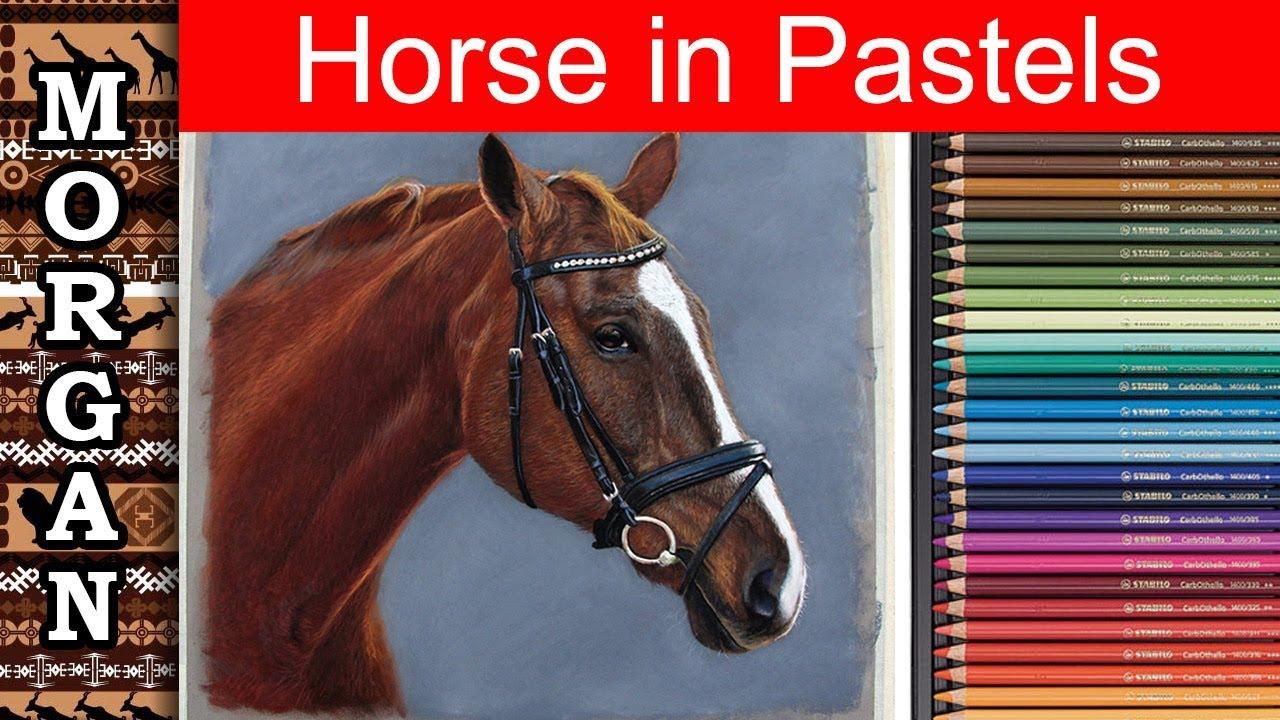 how to draw a horse using pastel pencils jason morgan wildlife art