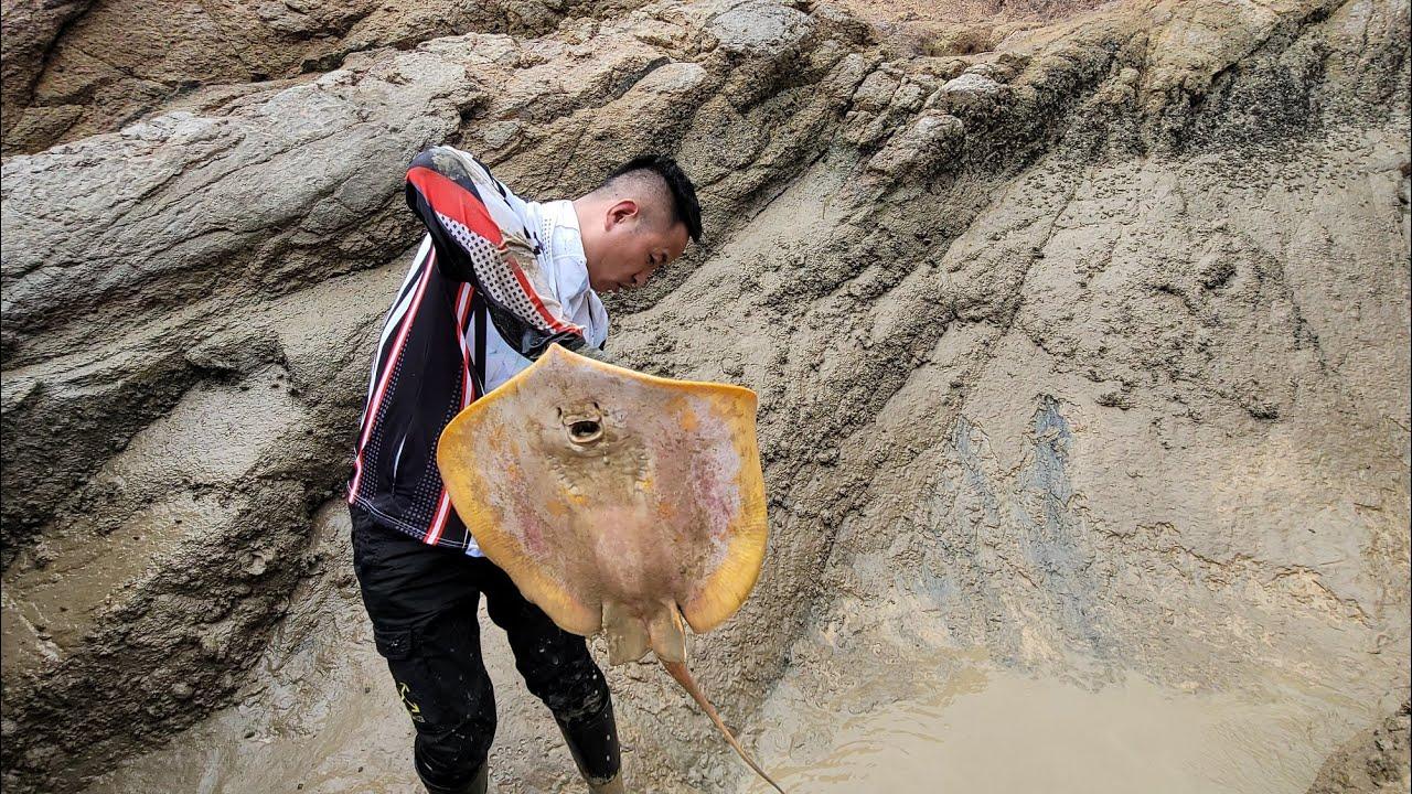 二十斤藤壶倒进大水坑,隔天引来十几斤的巨物,没想到还不止一条