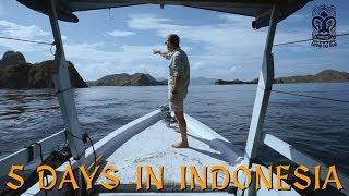 Комодские вараны, манты, Бали и о. Падар- 5 дней в Индонезии