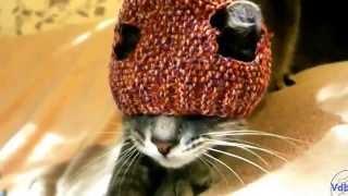 Кот в шапке пытается её снять под музыку