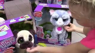 Покупка игрушечного котенка