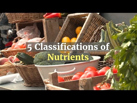 5 Classifications of Nutrients: What They Are and Why You Need Them