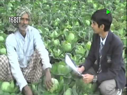 Farmer Interview on GM Crops