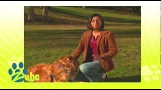 D64096 - Dreamwalker No Pull Dog Harness