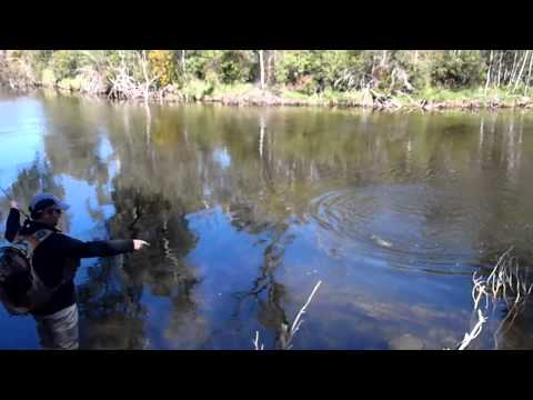 Catching a nice rainbow trout