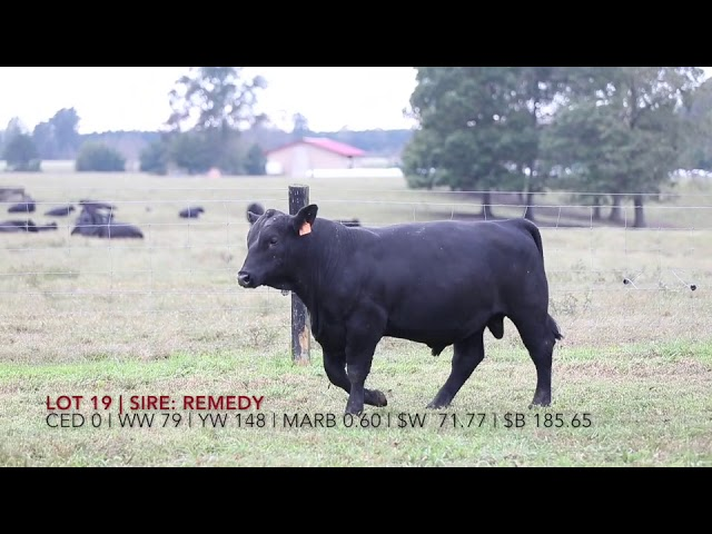 Edgewood Angus Lot 19