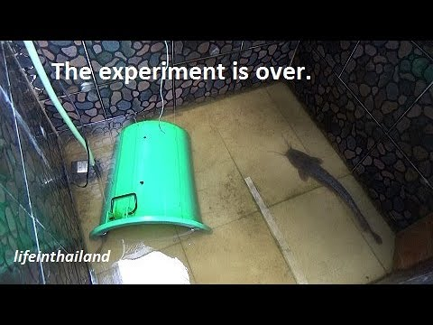 The Catfish Breeding Experiment Comes To An End.