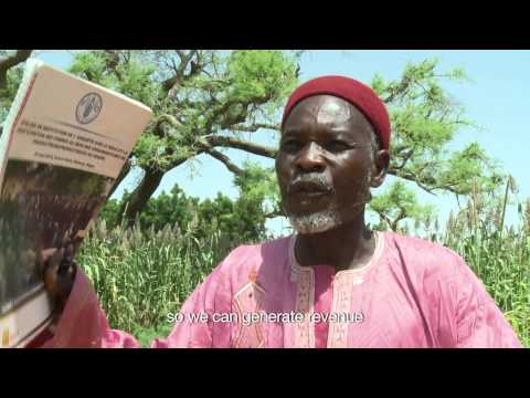 Growing Together: Intensifying agriculture in Niger