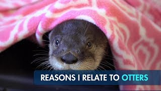 do-you-relate-to-otters