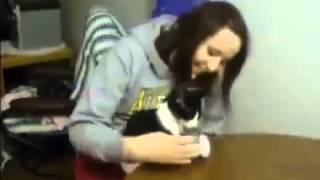 Смешные коты  И киски любят купаться