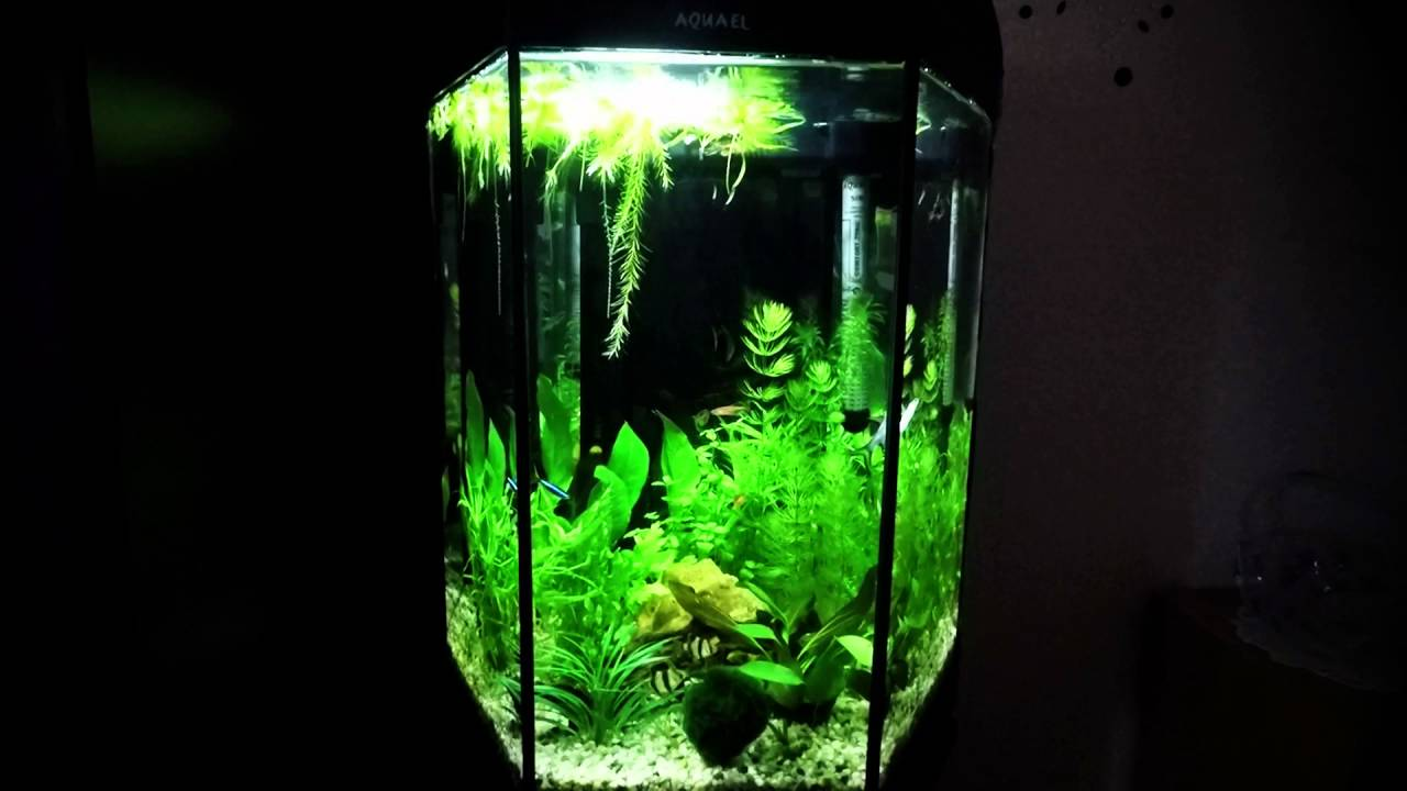 aquael hexagon 60 litre aquarium