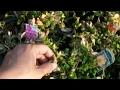 は行の植物の育て方 鉢花TV