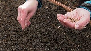 Ogród warzywny w marcu. Wysiew rzodkiewki, szpinaku, grochu i bobu.
