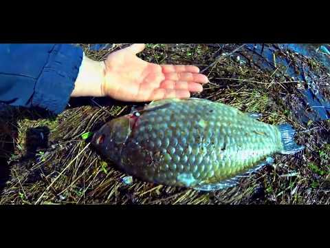 Аркадак 3-Номер замор рыбы 7.04.2019