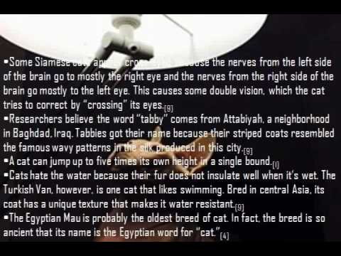 amazing 10 fact about cats | you must know if you cat lovers