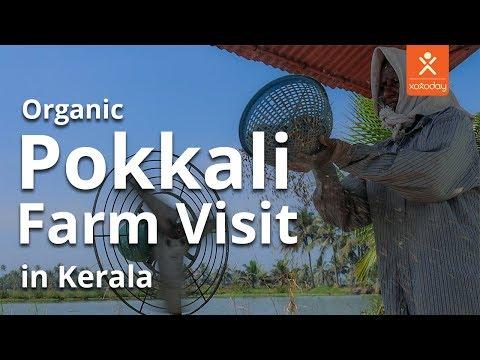 A Rejuvenating Pokkali Farm Visit