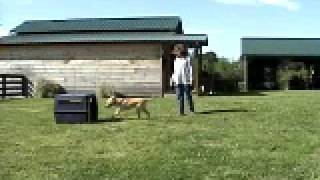 Georgia Dog Gym- Kennel Training Autumn