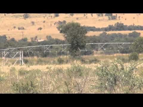 Koedoeberg Africa Safaris - South Africa plains game hunt kill shots