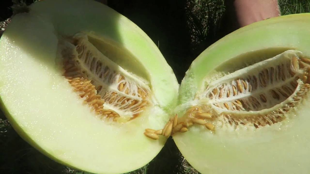 f74c300cf How to pick a PERFECT Honeydew! - YouTube