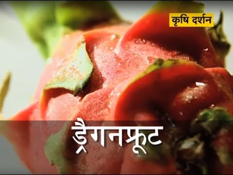 Krishi Darshan - Dragon fruit farming