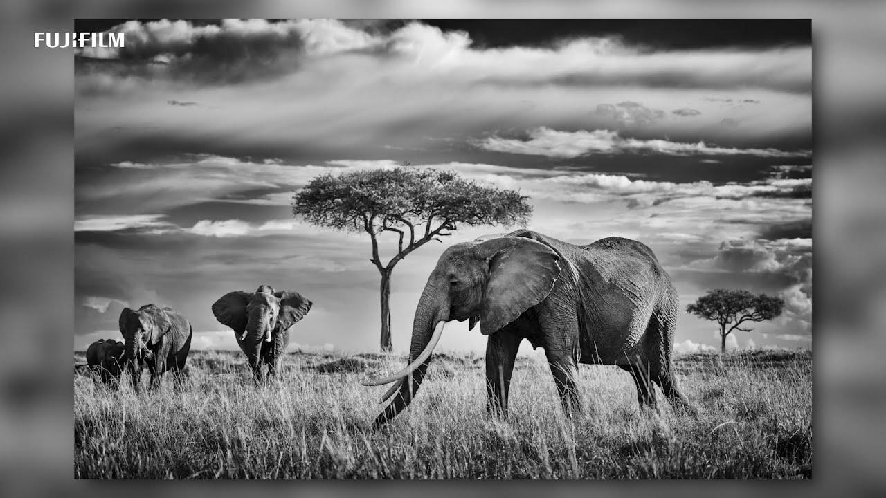 "GFX100: ""Wildlife in Africa"" x Peter Delaney/ FUJIFILM"