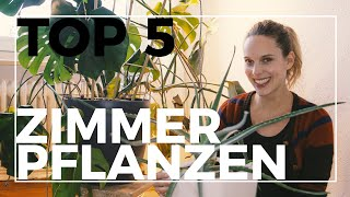 meine top 5 pflegeleichtesten zimmerpflanzen pflanzen  und pflegetipps verlosung