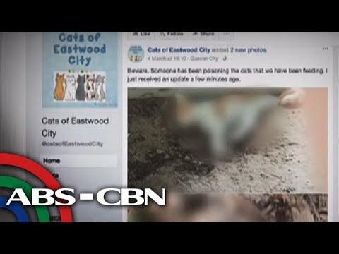 Bandila: Pagkamatay umano ng ilang pusa sa Eastwood, 'fake news'?
