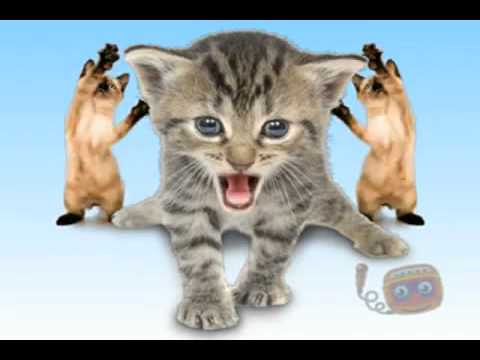 Cat's Rock Band   funny singing and dancing cats