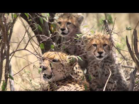 Royal Heights Tours, Kenya & Tanzania