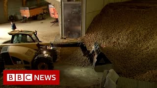 Coronavirus: Potato mountains and rotten cheese - BBC News