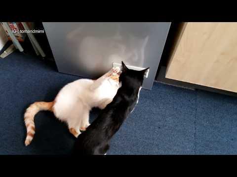 Cats Fighting | 4K