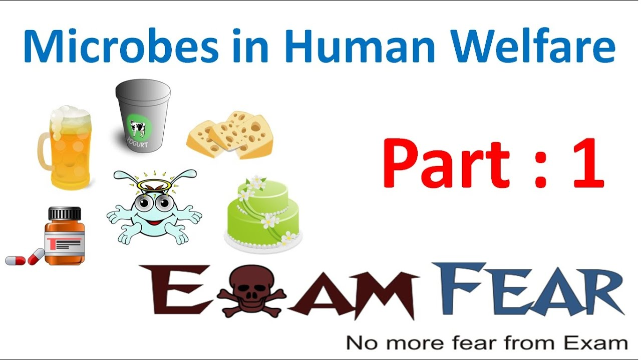 Microbes In Human Welfare By Mohanbio