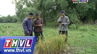 THVL | Thế giới cổ tích – Tập 81: Sự tích hạt lúa