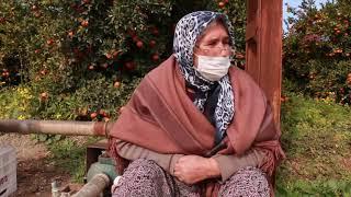 Çiftçi kadın, binbir emekle büyüttüğü ağaçlarının kesilmek istenmesine ağlıyor