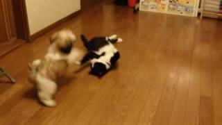 毎度まいどの食後のエクササイズ(笑)。猫のココアは軽くいなし、子犬...
