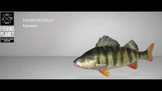 Fishing Planet Lesni Vila Fishery European Perch Spin