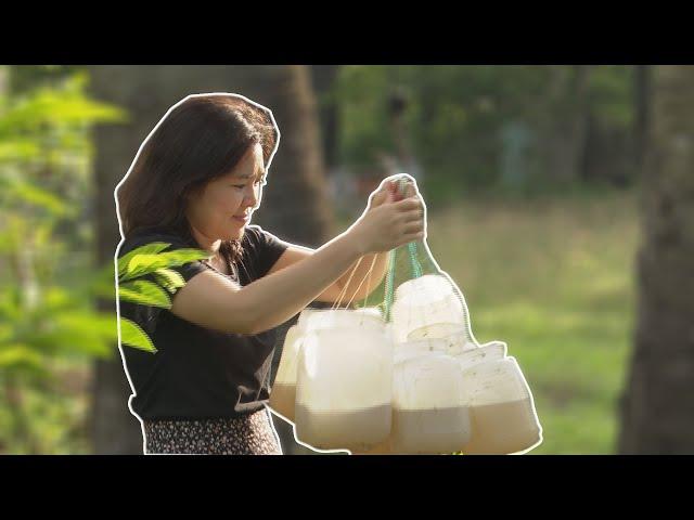 Cô gái Khmer bỏ phố về thất sơn khởi nghiệp cùng cây thốt nốt