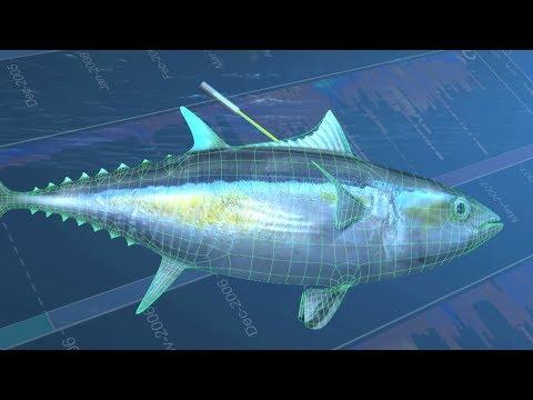 Solomon Islands: Saving The Pacific's Tuna