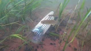 빈페트 병 으로 만든 물고기 통발 수중카메라 촬영