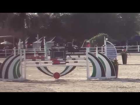 Z7 DUBAI CASTLEFIELD   Dubai Polo and Equestrian Club   6YOs
