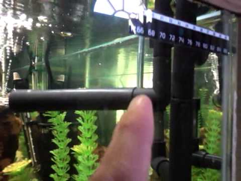 How To Get Oxygen In Your Tank With No Air Pump Youtube