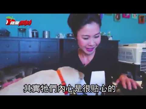 收養流浪狗-為狗搬進新店山區-台婦十年拯救1500狗-台灣蘋果日報