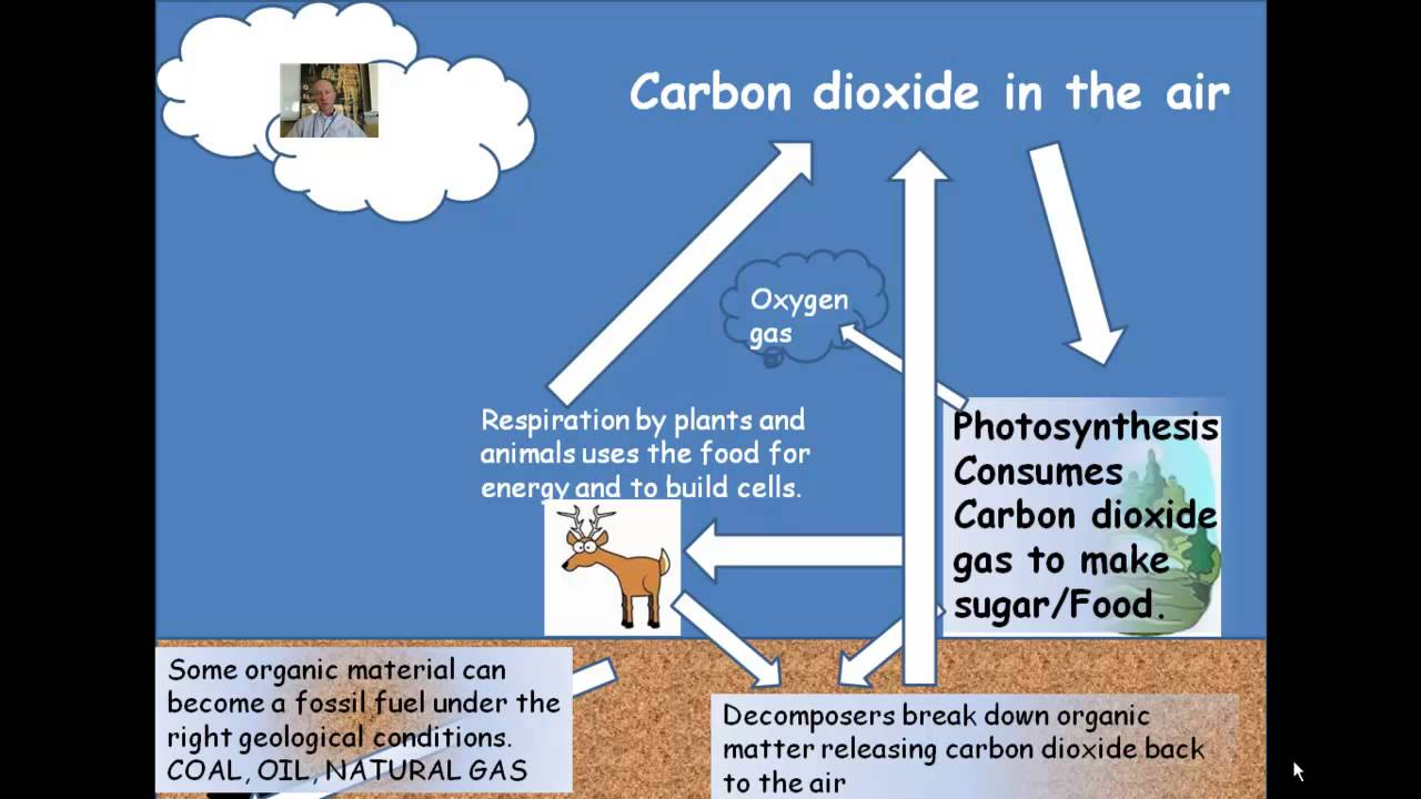 Carbon Oxygen Cycle - YouTube