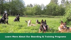 Dog Boarding and Training Seattle