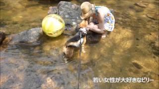 滋賀県大津市の湖南アルプス、荒々しい岩肌と美しい清流の流れるお気に...